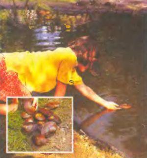 Караси и речные моллюски не дадут плодиться в вашем водоеме комарам.