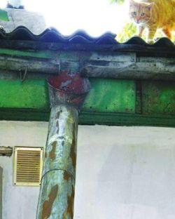 Сильно поржавевшие металлические водостоки легче и дешевле заменить, чем отремонтировать