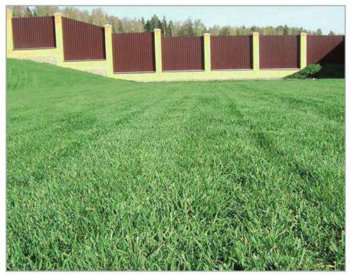 Газон из широколиственных трав