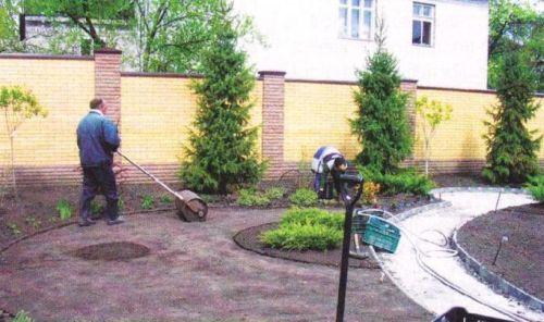 Устройство газона на даче