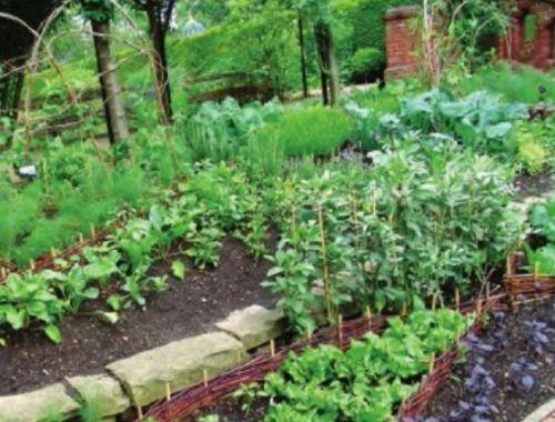 Аптекарский сад и огород