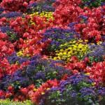 Цветочные композиции для вашего сада
