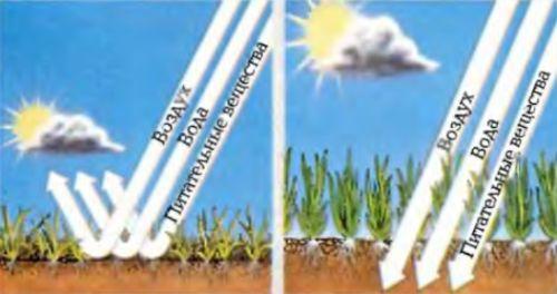 Дерн мешает глубоким корням травы