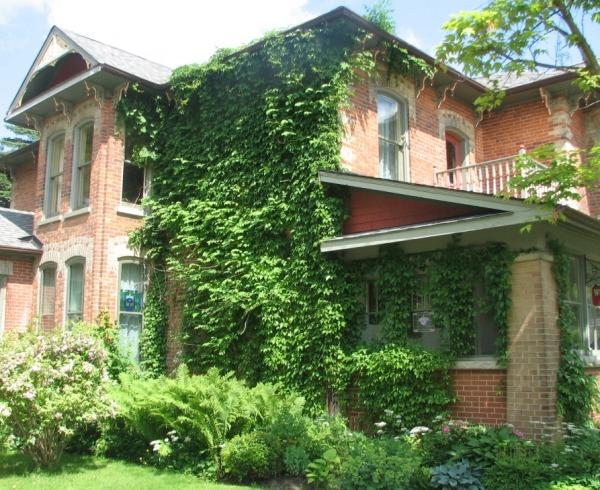 Вертикальное озеленение фасада