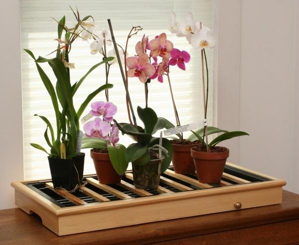 Фитодизайн - комнатные растения и цветы
