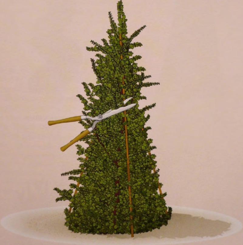 Фигурная стрижка дерева - формирование конуса