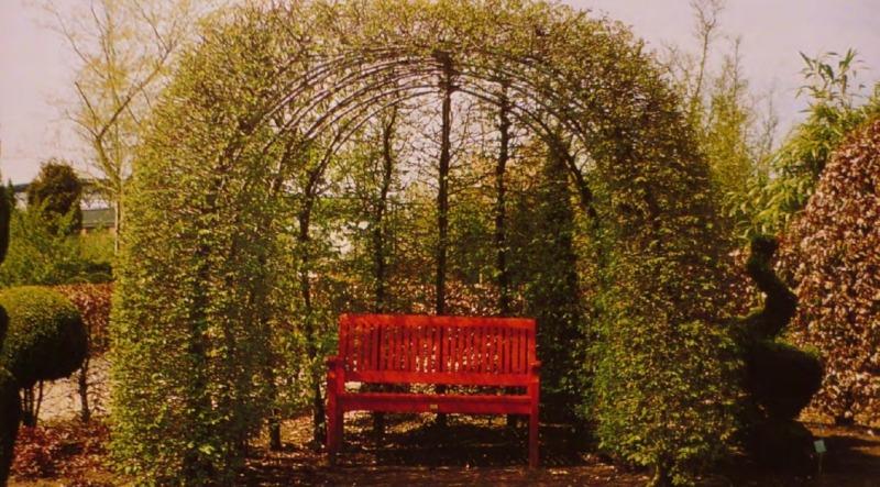 Зеленые арки образовали беседку