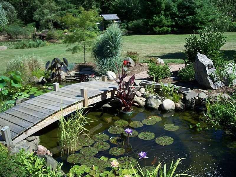 Дизайн садового пруда