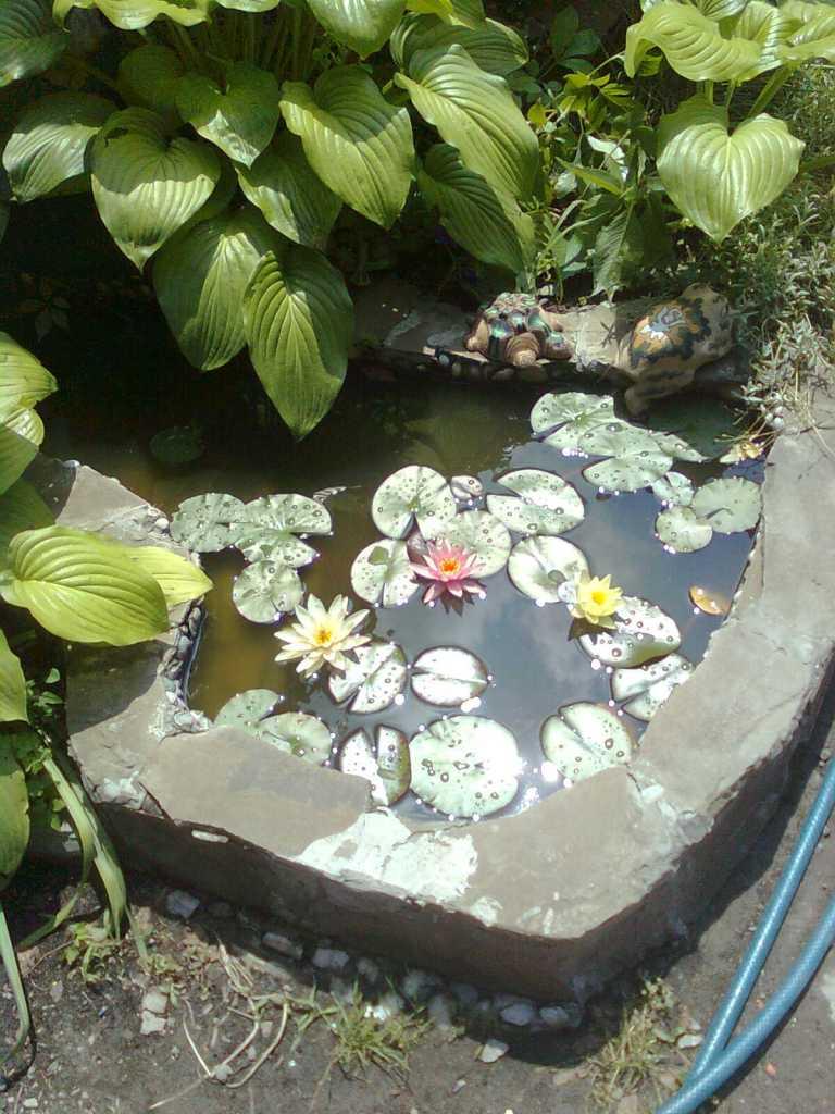 Декоративный садовый пруд