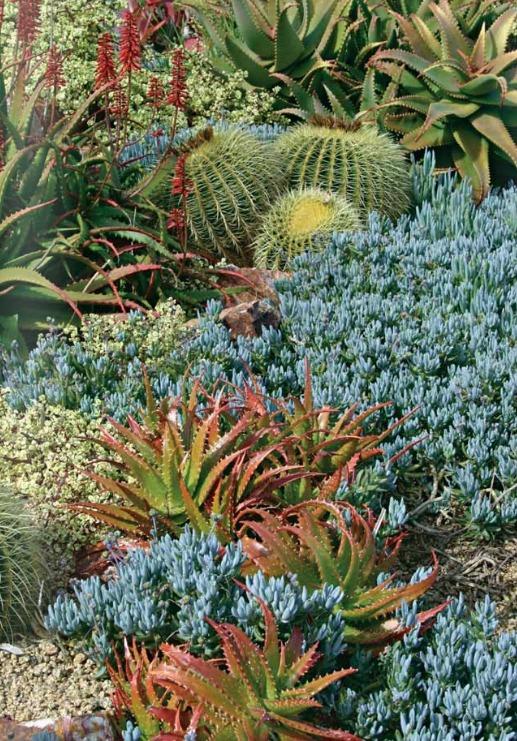 Колючий рай — цветник из кактусов