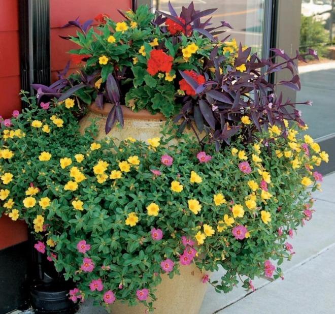 Мини-клумбы и цветники - изящные ландшафтные решения
