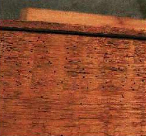 Личинок древоточца можно идентифицировать по маленьким отверстиям