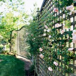 Сад и забор