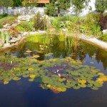 Искусственные водоемы. История одного озерца