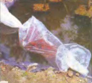 Рыбу выпускают в водоем не сразу: дают плавно сравняться температурам воды в мешке с рыбой и в водоеме.