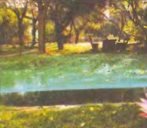 Осенью над озерцом натянули сетку, а нависающие над водой ветки подрезали. Пришлось защищаться от падающих листьев и яблок.