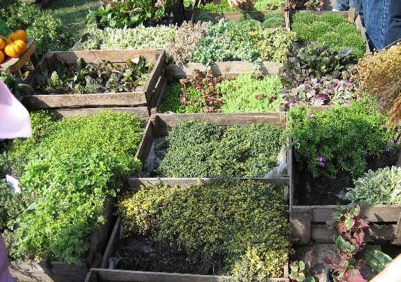 Почвопокровные растения - альтернатива травяным газонам
