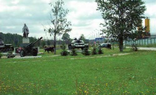 В луговой газон высеивают неприхотливые травы, требующие минимального ухода и редкой косьбы. Нередко такие газоны засорены сорняками, на них пасут скот и в порядок приводят лишь к определённым мероприятиям