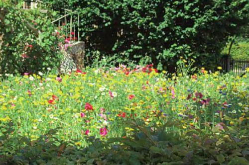 Цветущий мавританский газон весьма эффективен во время цветения, так как может содержать до 50 различных полевых цветущих трав. Однако после цветения имеет довольно неопрятный вид, поэтому, если не планируется его восстановление путем самовысева, мавританский газон косят сразу после отцветания большинства трав