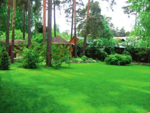 В теневой газон подобраны травы, выдерживающие сильное затенение. Они хорошо себя чувствуют в условиях «полян», но несколько угнетаются непосредственно в пределах корневого круга крупных деревьев и кустов — туда подсеивают садовый газон