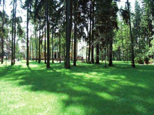 Специальный газон для кислых почв можно рассматривать, как комбинацию лугового и теневого газона — он теневынослив, медленно растёт, его редко стригут, допускается некоторая засорённость лесными травами. Однако сильные механические нагрузки он выносит плохо
