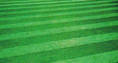 Чтобы трава развивалась равномерно, на каждом втором укосе меняют направление движения при скашивании