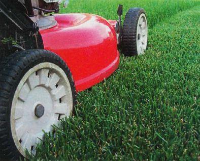 Для ровного скашивания газона без огрех колеса газонокосилки с одной стороны следует вести по уже скошенной полосе