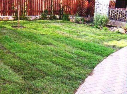 Процесс укладки рулонного газона