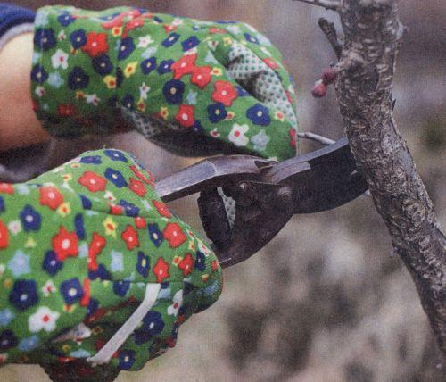 Особенности обрезки садовых деревьев