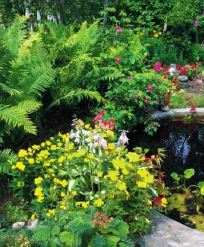 Реликтовые растения в вашем саду. Папоротники