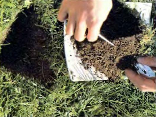 Проба почвы