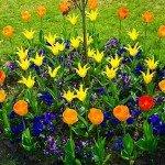 Как сделать клумбу, цветник или цветочницу на дачном участке