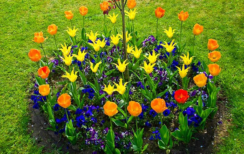 как сделать клумбу цветник или цветочницу на дачном участке
