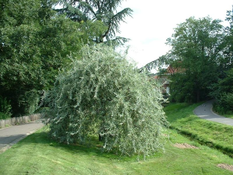 Топ модели деревьев для сада