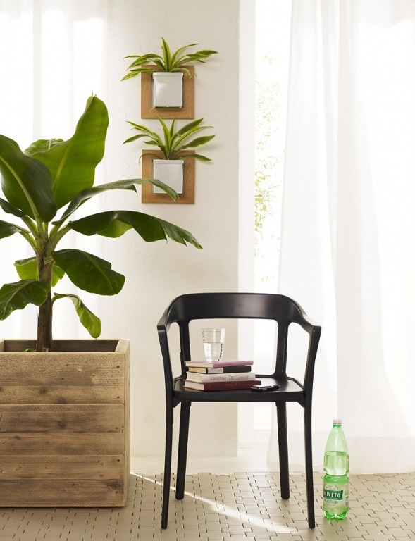 Идеи озеленения квартиры и дома