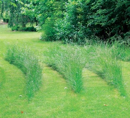 Оригинальная стрижка газона