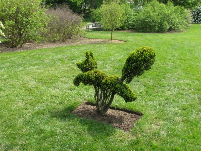 Топиарные фигуры и скульптуры из растений