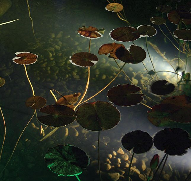 Декоративный садовый пруд - подсветка