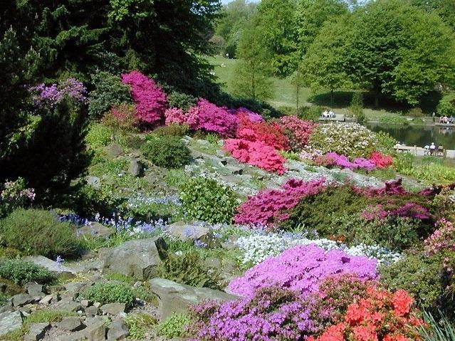 Каменистый сад в европейском стиле