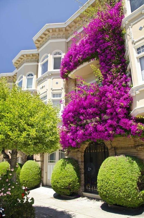 Озеленение фасадов зданий. Вертикальное озеленение