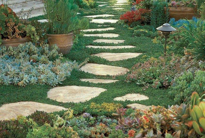 Колючий рай - цветник из кактусов
