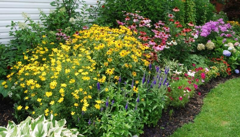 Формирование садовых растительных композиций