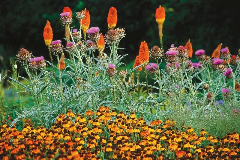Гелениум (Helenium) садовая композиция
