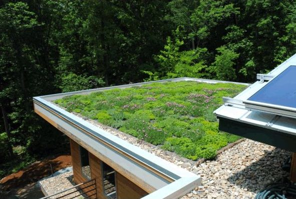 Газон на крыше или озеленение крыши