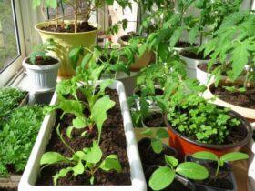 Фрукты и овощи в домашних условиях